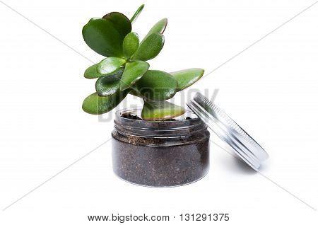Transparent Plastic Jar As Plant Pot With Dirt Or Soil