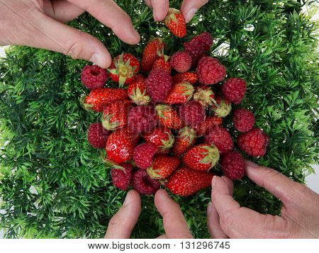 Woman And Man Hands Holding Raspberries And Strawberries