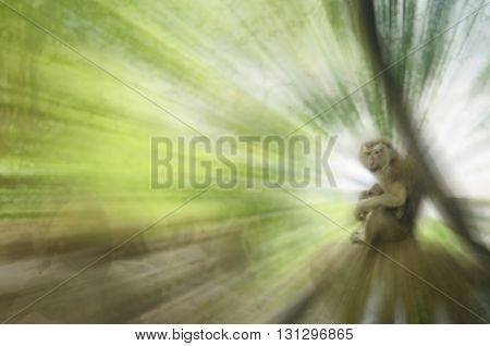 Motion blur monkey in nature abstract background.