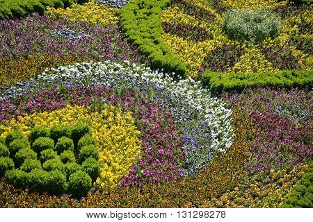 Multicoloured carpet of flowers. Flowerbed contains different heart's ease and little boxwoods.