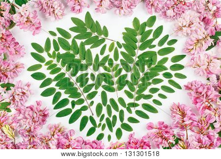 Pattern with acacia flowers and acacia leaves in the shape of heart on white background. Top view. Flat lay
