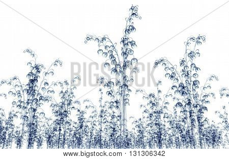 X-ray Image Of A Flower Isolated On White , The White Bell