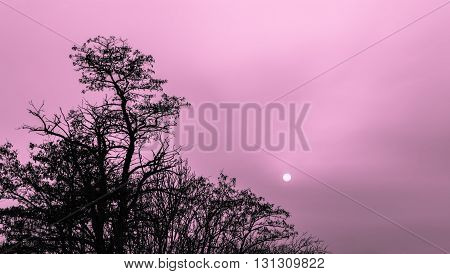 silhouette of the tree at dusk with the moon