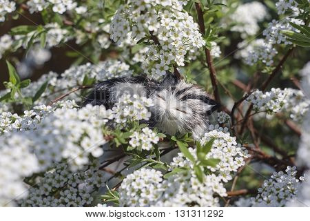 Little cat toy in meadowsweet blossoms close up