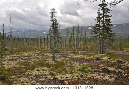 Mountain taiga Taimyr. The Taimyr Peninsula Putorana plateau Siberia Russia.