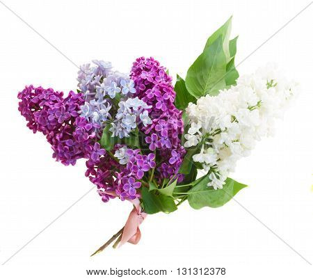 Posy of fresh lilac flowers with green leaves isolated on white background