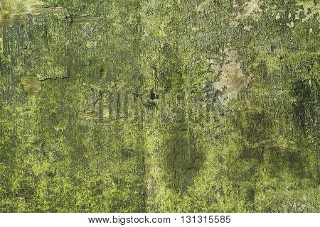 Wood texture with weathered look old and green