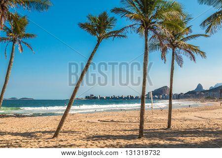 Palms trees in Copacabana Beach in Rio de Janeiro