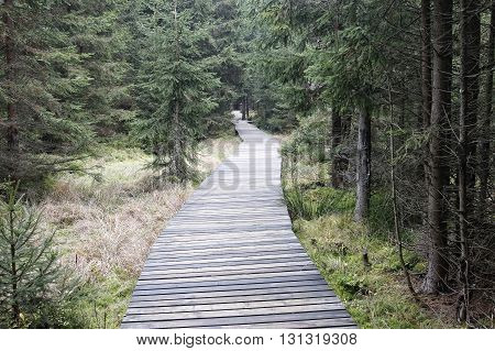 The nature trail in a nature reserve Kladska - Slavkov forest