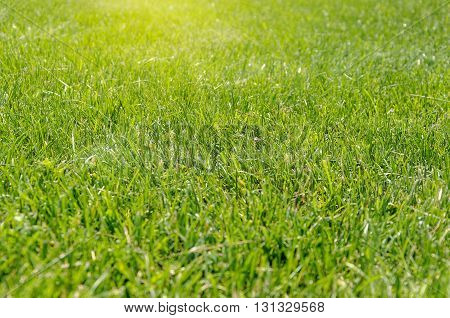 Natural green background with selective focus. Natural green background