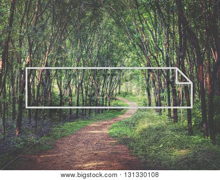 Nature Green Forest Outdoors Beautiful Concept