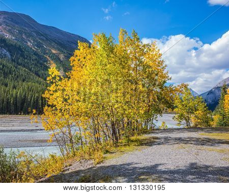 Rocky Mountains. The picturesque valley in Jasper National Park. Shallowed autumn river at the bottom of the canyon