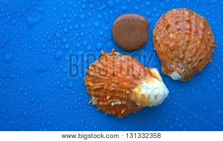 cockleshells, salt, different colors, sea subject, nature, round, cone, different colors of a background, stones,