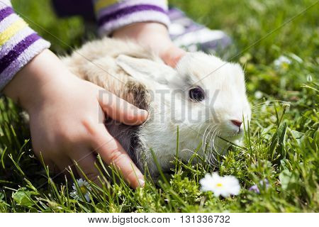 The little bunny is in child hands on grass background.