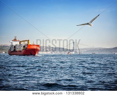 Cargo ship at sea under the sky with gull