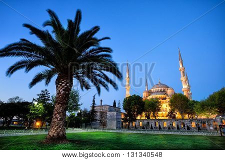 Sultanahmet Mosque with palm tree at sunrise