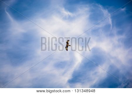 Hawk flying in the blue sky and clouds