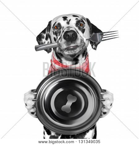 dog wants to eat and hold bow and fork -- isolated on white