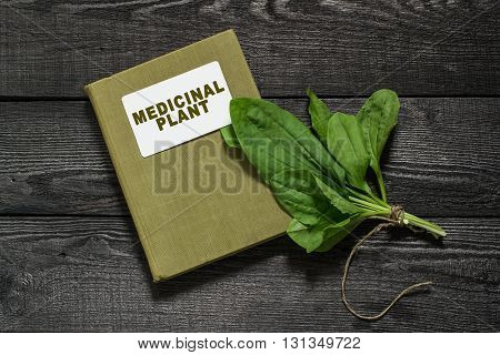 Common medicinal plant plantain (Plantago major) and directory herbalist on an old wooden table