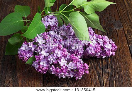 Sprig of violet lilac on dark wooden table close up