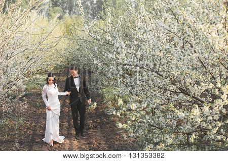 Newlyweds walking along the blooming garden. Spring. Vintage.