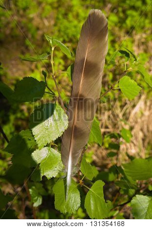 birch branch, young green leaves, on branches a feather of a bird, a grass on a background
