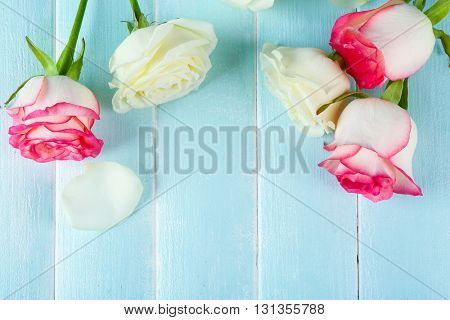 Roses on a light blue wooden background.