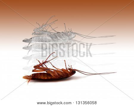 death insect cockroach with spirit on brown colors background