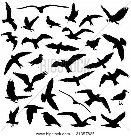 Set of birds silhouettes 30 in 1 on white background. Vector illustration