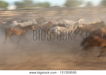 Blurred image without focus herd of horses in motion. Guides in the stall.