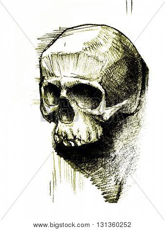 Black and white human skull. Hand drawn.