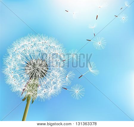 Stylish nature blue background with flower dandelion blowing seeds. Trendy floral summer or spring wallpaper. Vector illustration