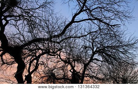 Silhouette of Ominous Trees in the southwest Desert