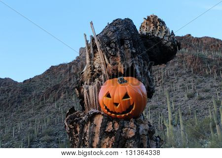 Halloween in the Desert featuring a Jack o Lantern in the Skeleton of a Saguaro Cactus