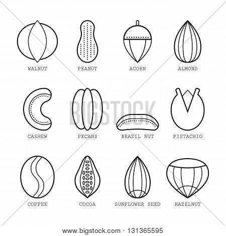 Set of flat linear icons with different nuts. Vector illustration