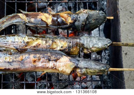 Catfish are grilled with charcoal on stove