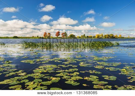 Pond with water lilies and grass at sunny autumn day
