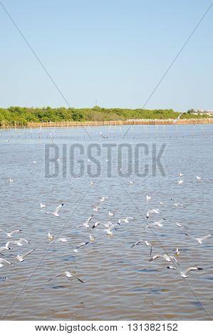 group seagull bird at Bang Pu beach, Thailand