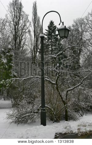 Winter 50