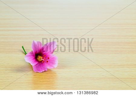 Hibiscus rosa sinensis flower on wooden panel
