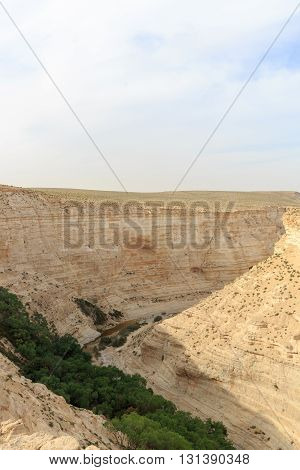 Top View On Trees In Canyon Ein Avdat