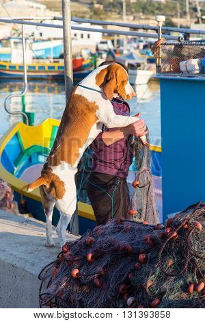 beautiful dog at the boat pier of the island in the fishing village of Marsaxlokk