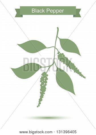 Black pepper branch. Green silhouette of pepper. Vector illustration