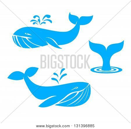 Collection of different whales, blue on white background of ocean mammals.