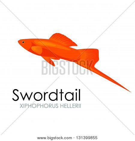 Aquarium fish swordtail, vector illustration isolated on white background. Fish flat style vector illustration.
