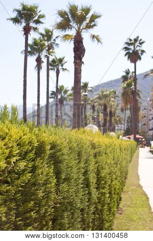 Close-up photo of bushes with palms on background.