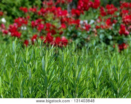 green grass amid a flowered garden, close-up