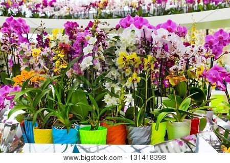 Variety of many different orchid flowers in multicolored flower pot