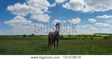 Green field with blue sky and horse