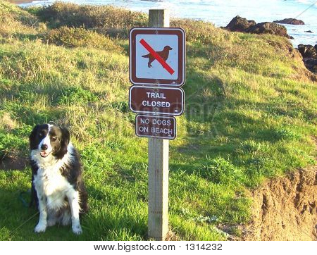 Dog Forbidden From The Beach